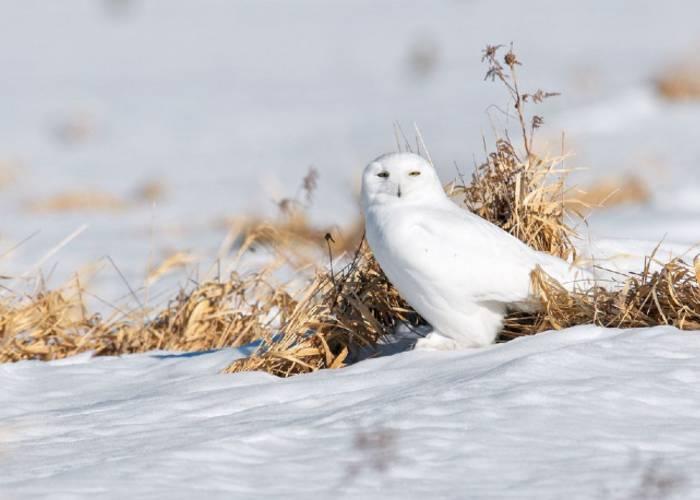 Ilya Bronshteyn. Winter Bird.